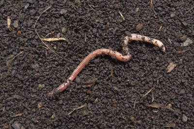 Worm on Worm Castings
