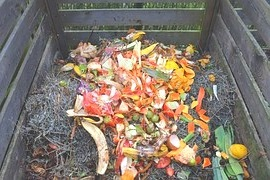Worm Castings Vs Compost